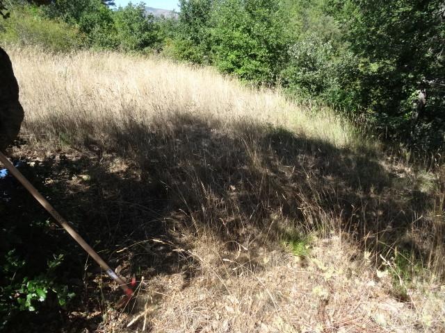 Journal de l'aménagement d'un terrain par une débutante : quelques photos récentes - Page 4 Dsc01251