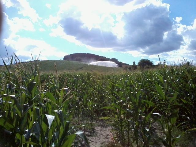 maïs 2016 - Page 9 Photo028