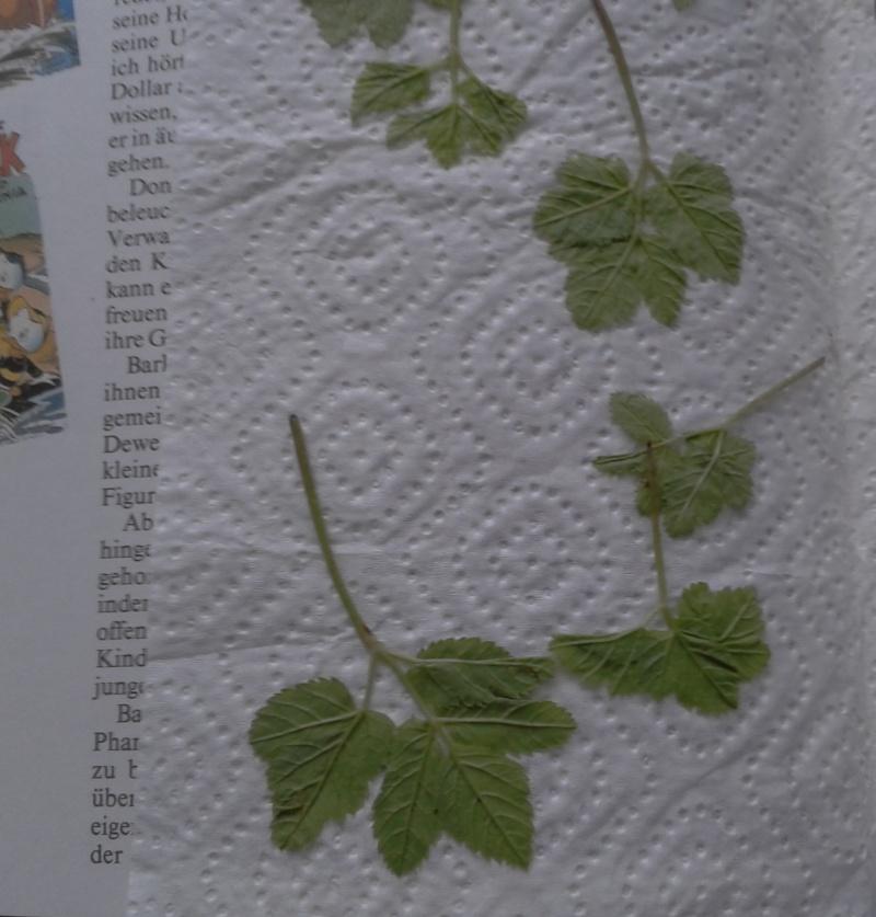 Die alte Moorstecherstraße – Kopfsteinpflaster Blatte10