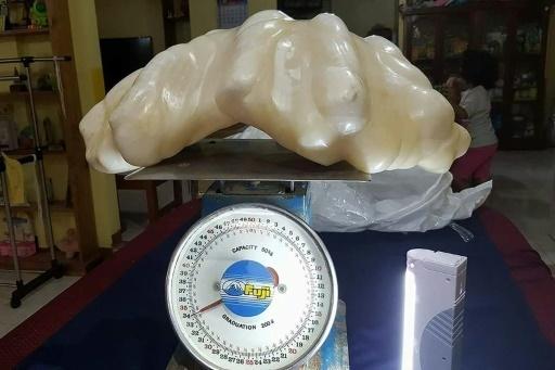 Perle de bénitier de 34 kg Perle_10