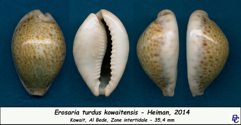 Naria turdus - (Lamarck, 1810) - Page 3 Turdus15