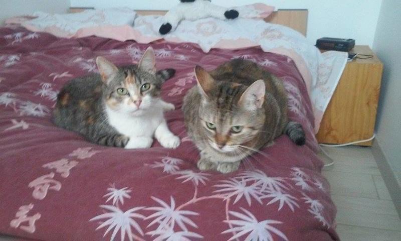 Ava tricolore et Amber tricolore et blanche - nées en 2011 e 13652410