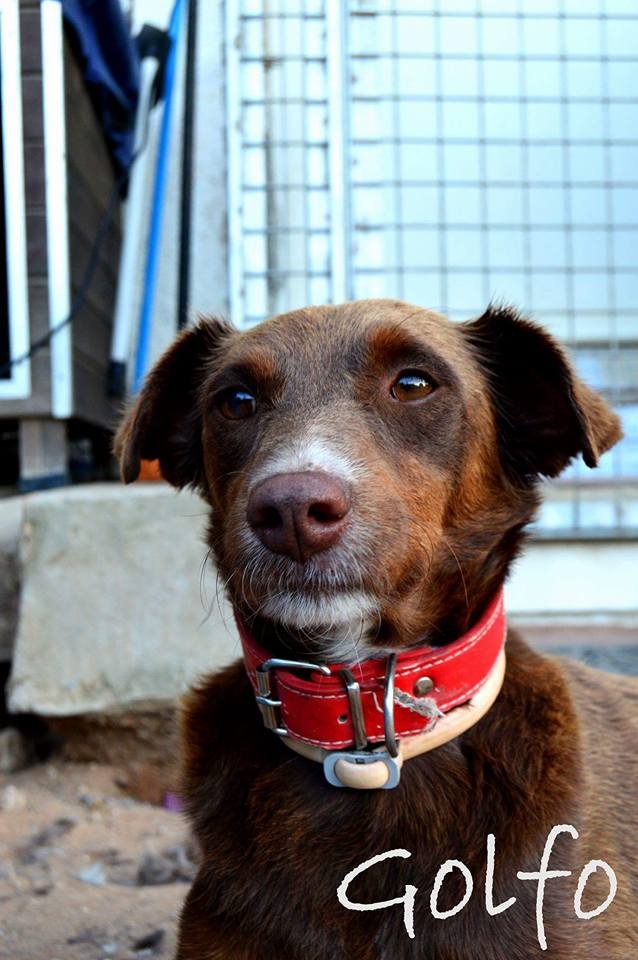 Canis - Golfo 13510710
