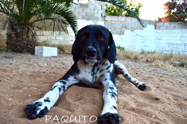Canis - Paquito  13557710