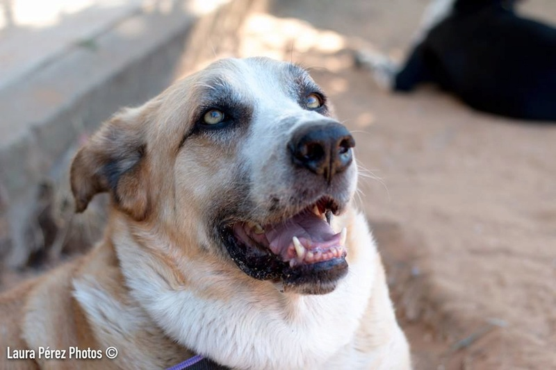 Canis Thor(Gedeeltelijke adoptie) 13690710