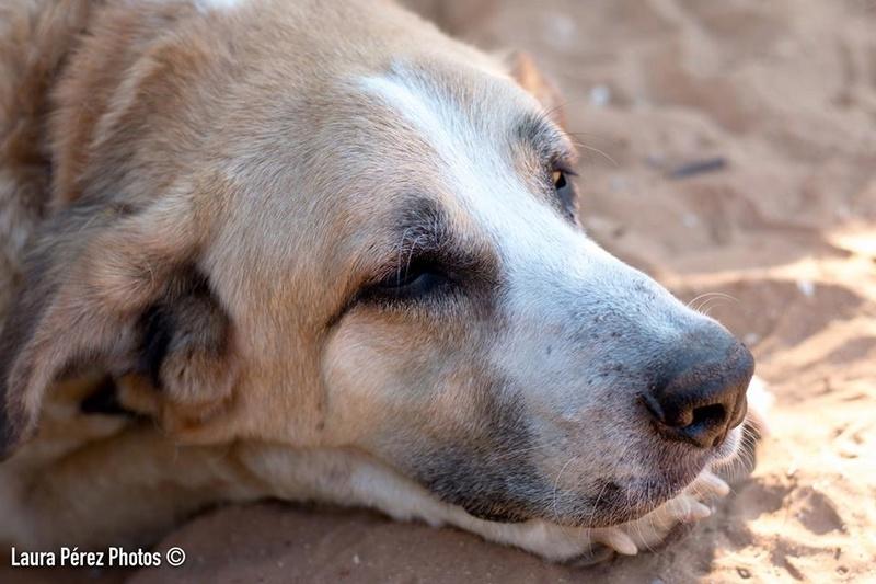Canis Thor(Gedeeltelijke adoptie) 13776010