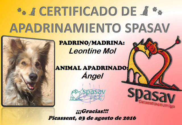 SP Angel Angel10