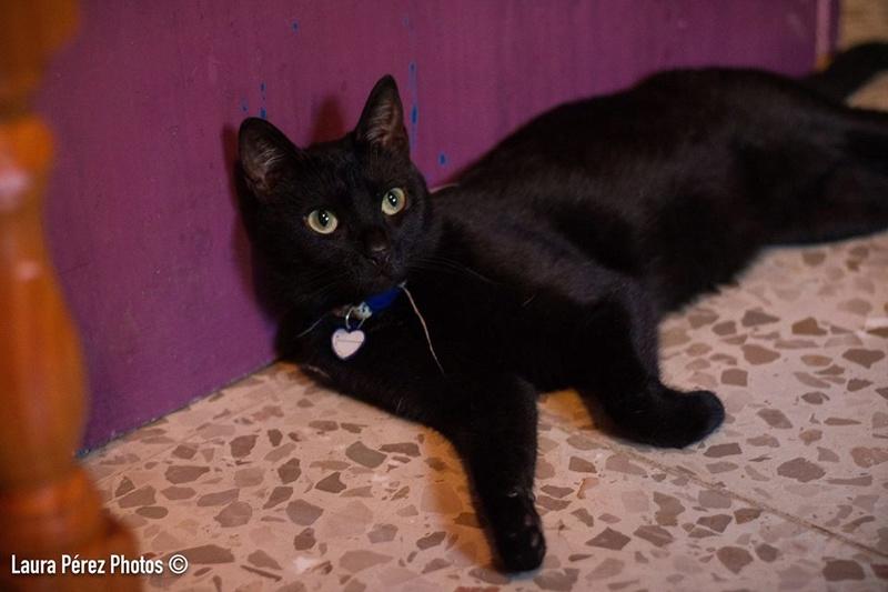 Canis - Sam (gedeeltelijke adoptie) Sam110
