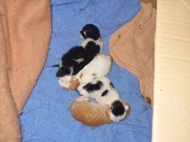 Portée de 5 chatons à placer contre bons soins Les4zo10