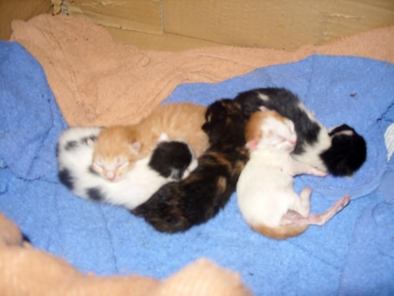 Portée de 5 chatons à placer contre bons soins Portae10