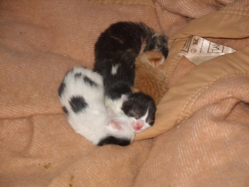 Portée de 5 chatons à placer contre bons soins Portee10