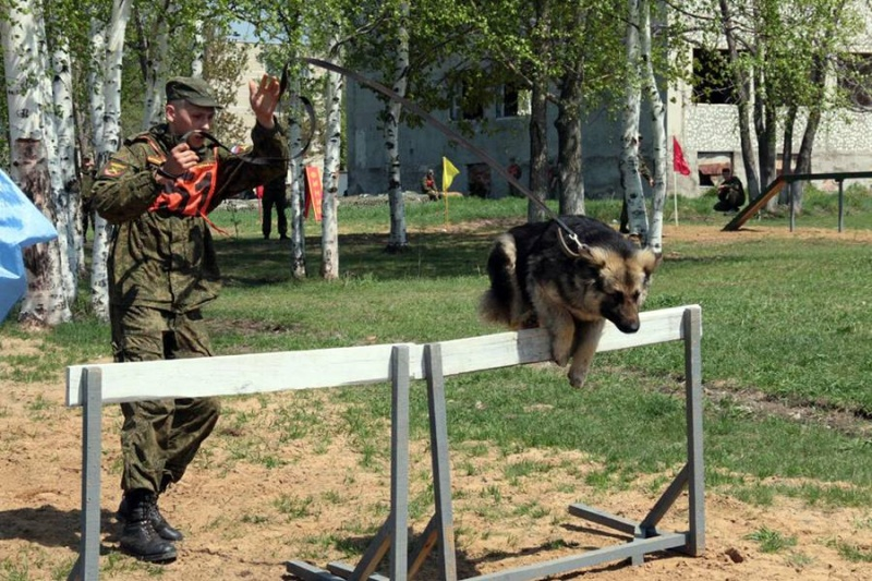 Animaux soldats - Page 6 5320