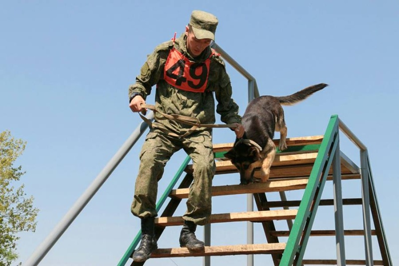 Animaux soldats - Page 6 5514