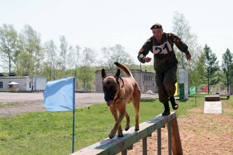 Animaux soldats - Page 6 5712