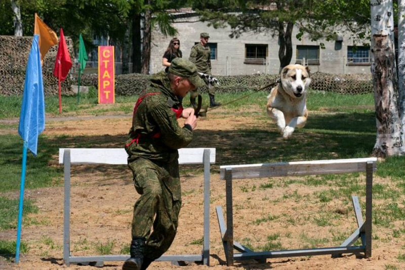 Animaux soldats - Page 6 5812