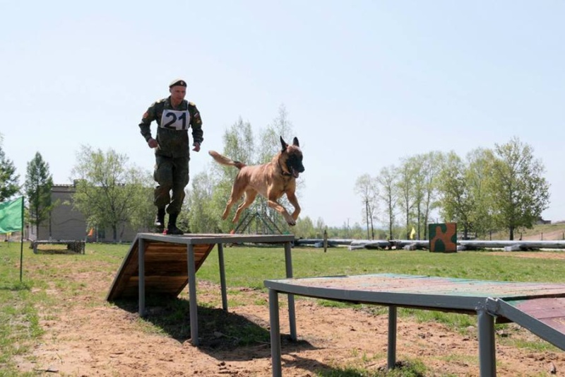 Animaux soldats - Page 6 6012