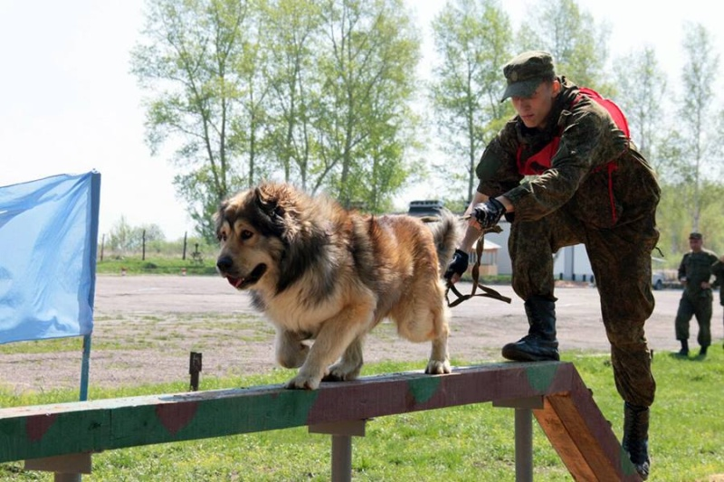 Animaux soldats - Page 6 6112