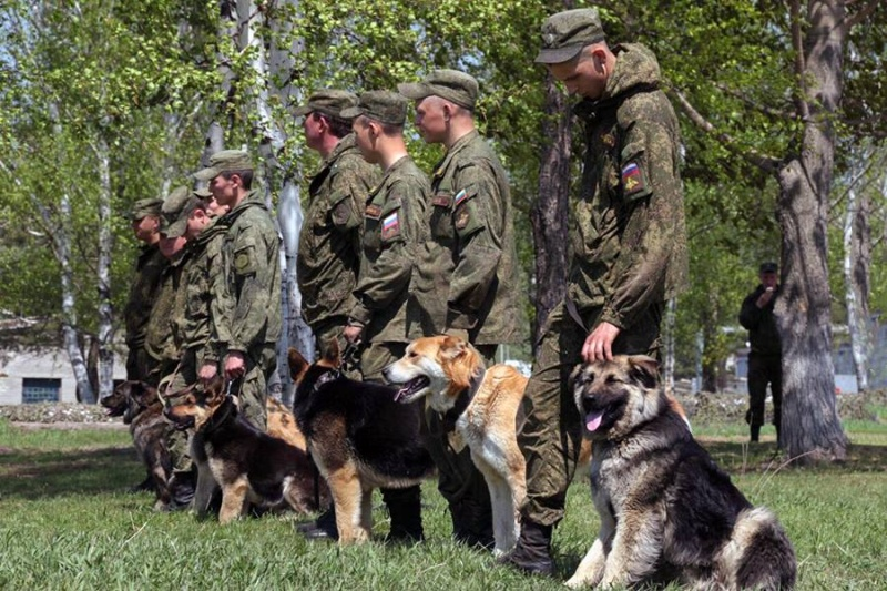 Animaux soldats - Page 6 6212