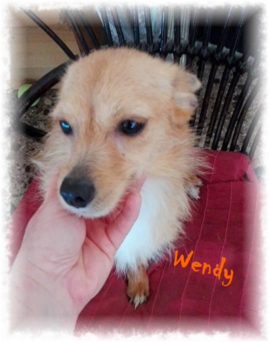 WENDY X spitz 2 ans dep 30 13321911