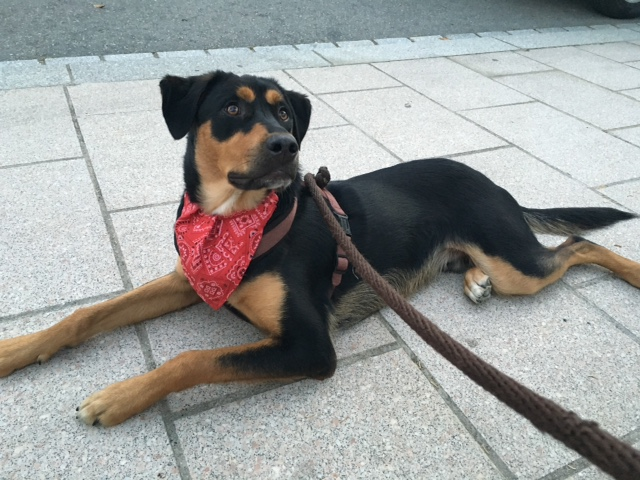 [Clos]Visite post adoption (chien) pour Lenox à Etrelles Img_6910