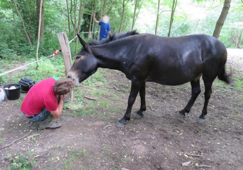 VIOLETTE dite PETALE - ONC Mule née en 2006 - adoptée en octobre 2012 par Jean 16_pub10