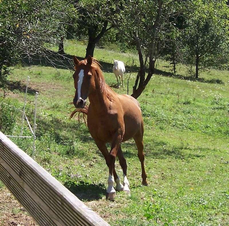 MISTRAL et TEXAS (2 chevaux inséparables) - solution trouvée par la propriétaire en octobre 2016 Mistra12