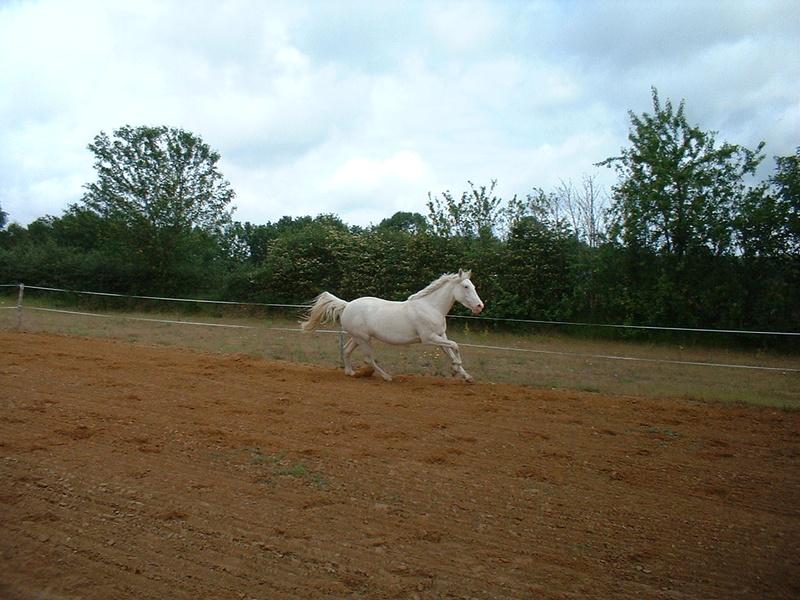 MISTRAL et TEXAS (2 chevaux inséparables) - solution trouvée par la propriétaire en octobre 2016 Texas11