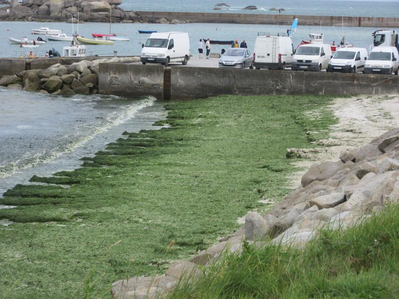 Plouescat : baie de Kernic/PorsMeur/Pors-Guen...  - Page 20 00912