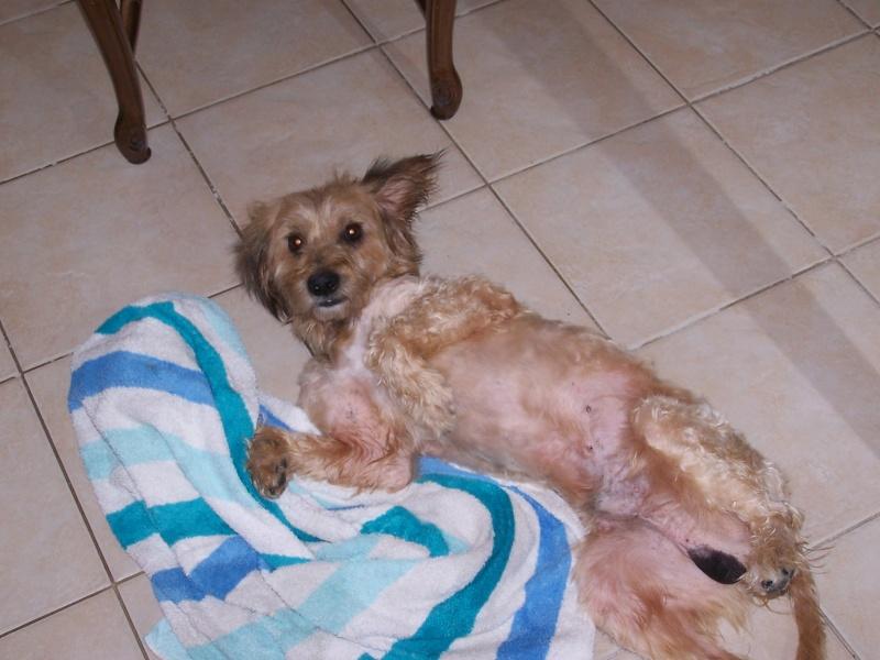 Benji un chien qui a besoin d'amour  - Page 2 100_1714