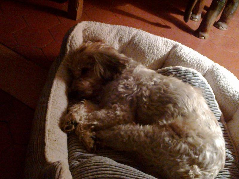 Benji un chien qui a besoin d'amour  - Page 2 21092011