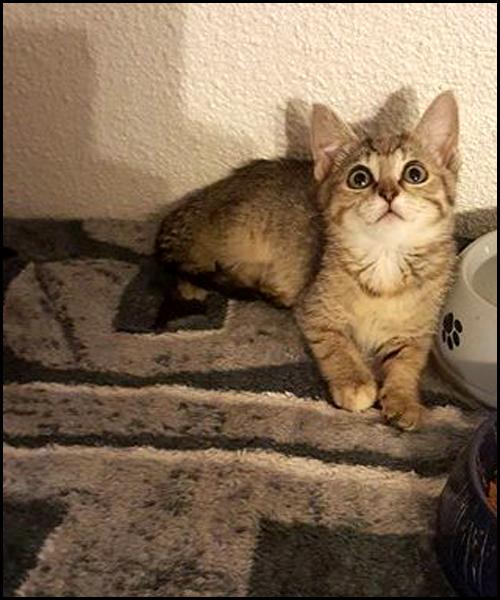 MARIANE chaton à l'adoption 13435810
