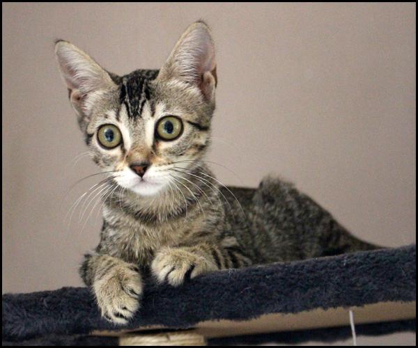 MOLLY chatonne à l'adoption 13639610