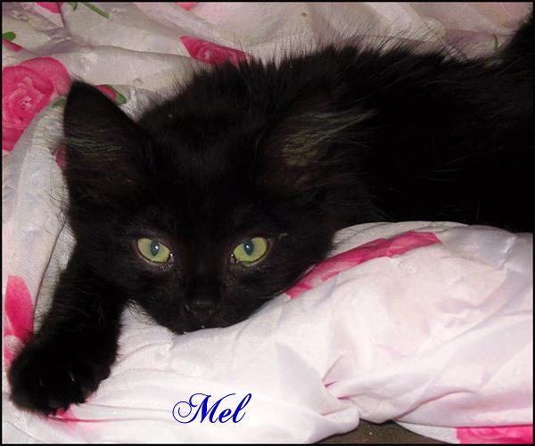 MEL une perle noire à l'adoption 13817210