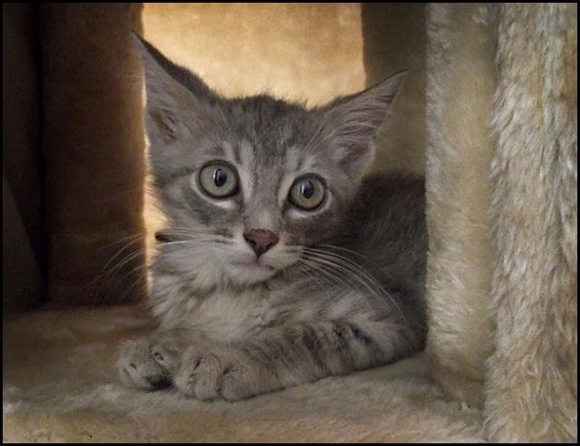 MINET à l'adoption 13933310
