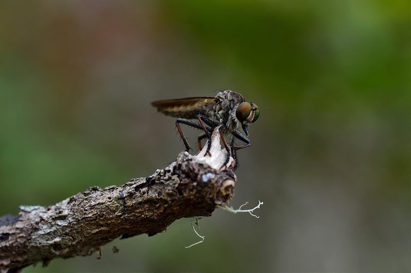 deux insectes à identifier 20164210