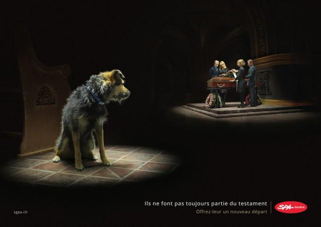 L'actualité de la protection animale - Page 2 Spa_ge10