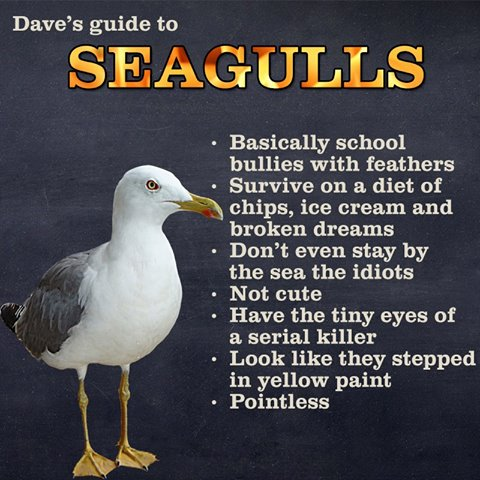 Guide to seagulls. 11737910