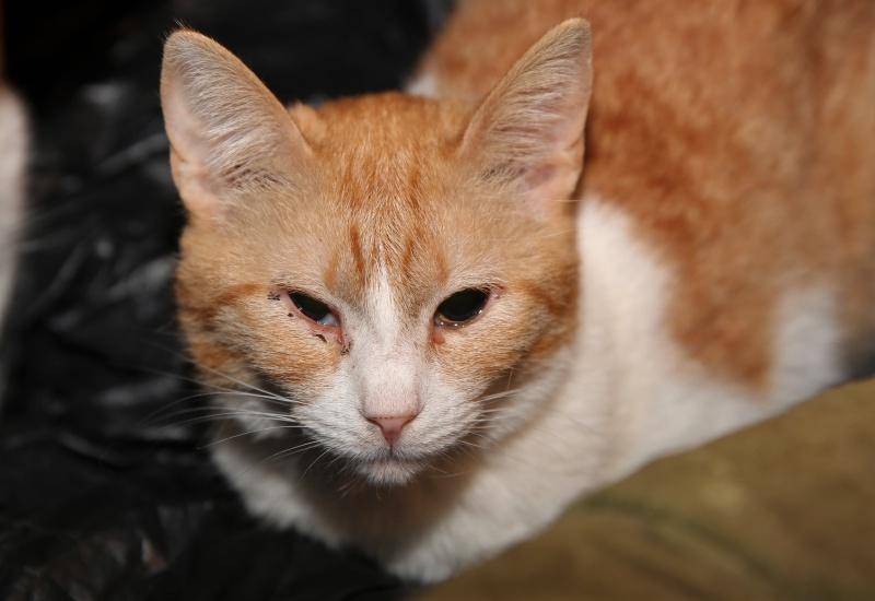Parrainage des chats de Mme Angela Hx9a3812