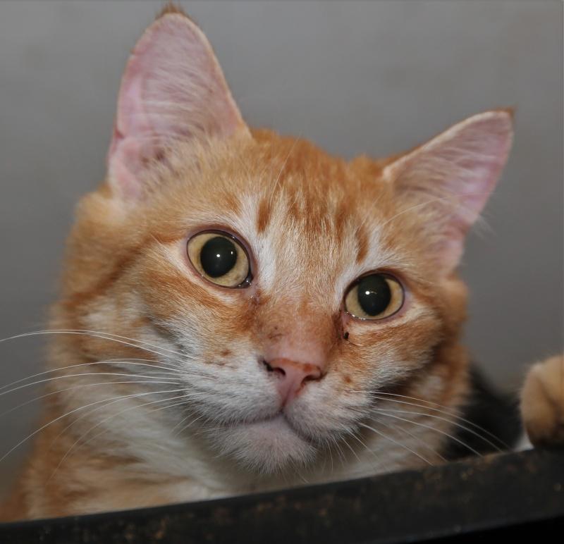 Parrainage des chats de Mme Angela Hx9a3912