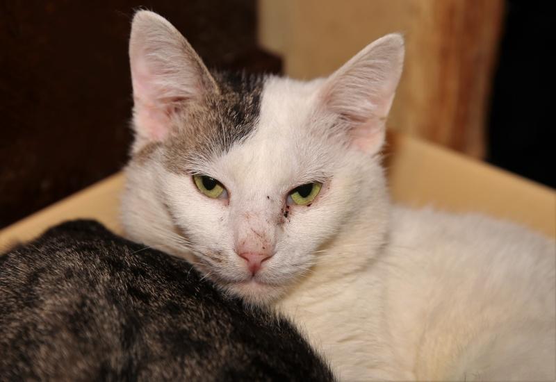 Parrainage des chats de Mme Angela Hx9a3914