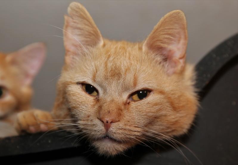 Parrainage des chats de Mme Angela Hx9a3915