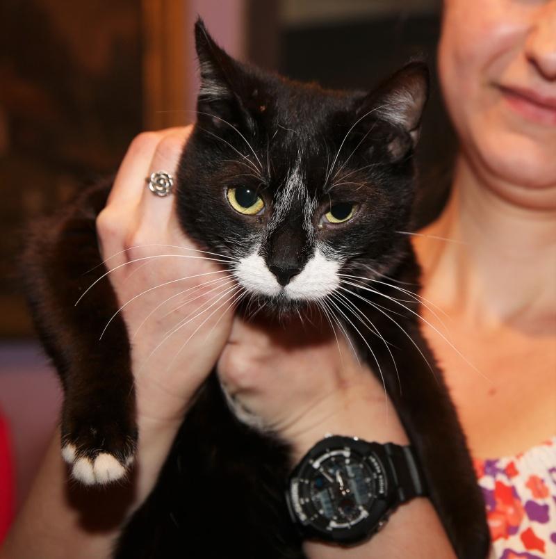 Parrainage des chats de Mme Angela Hx9a3916
