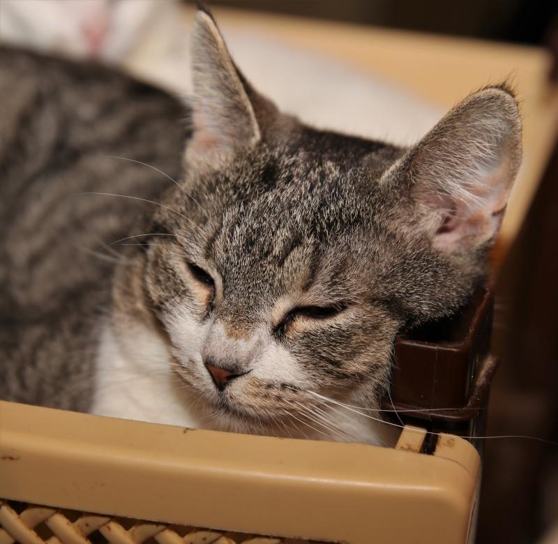 Parrainage des chats de Mme Angela Hx9a3918