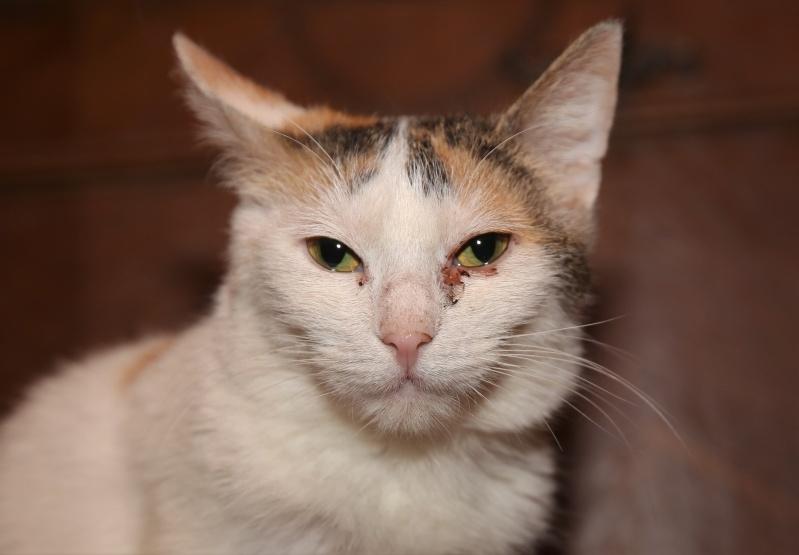 Parrainage des chats de Mme Angela Hx9a3919