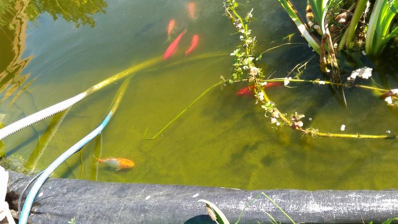 Mes poissons... P_201612