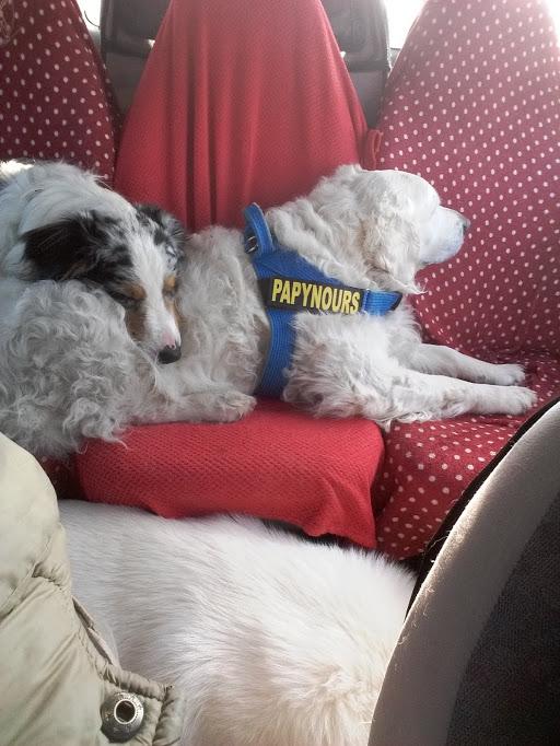 Transport du chien  20160310