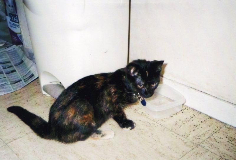 Holly, femelle écaille de tortue, née en février 2012 Holly010