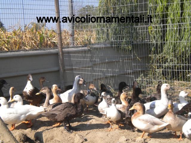 Qualche foto del 2012 Dscn8610