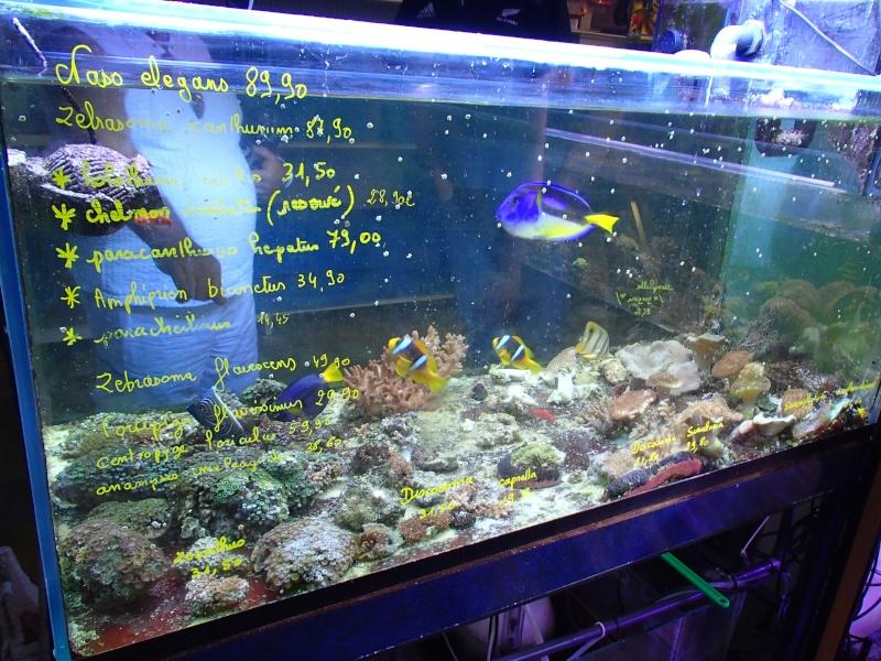 Sortie association au poisson d or P8220012