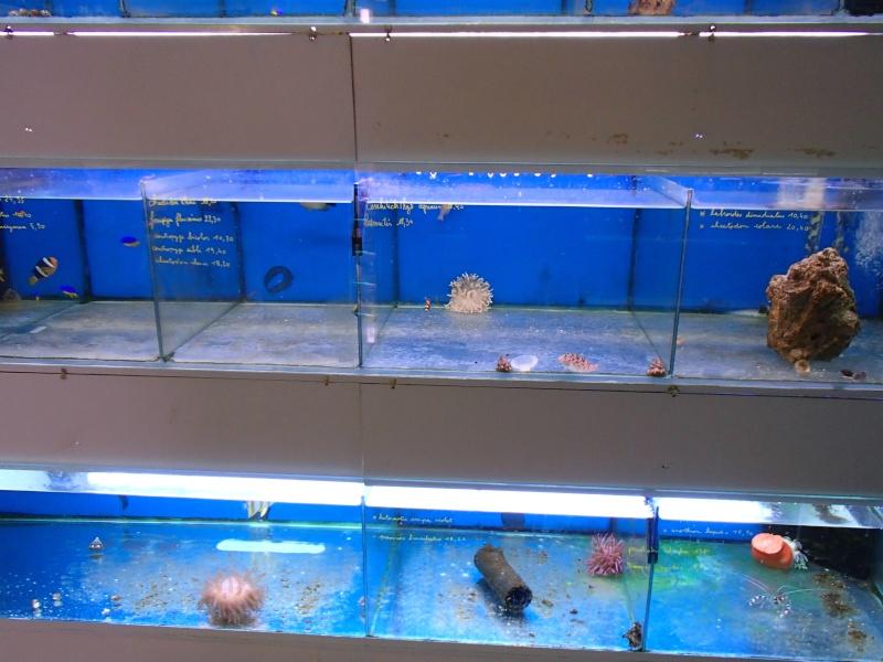 Sortie association au poisson d or P8220021